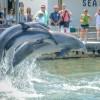 Vivez une expérience de formation avec des dauphins en Floride