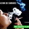 Légalisation du cannabis: les experts de l'UQTR se prononcent